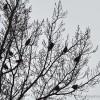 Birds-in-tree-sillhouttte